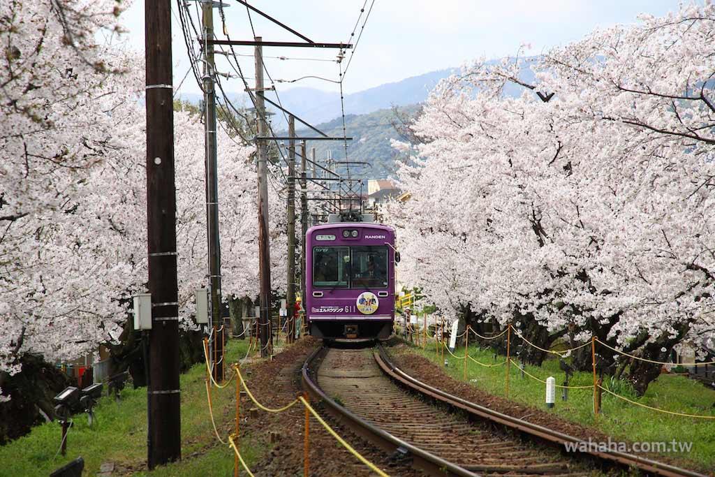 京都嵐電「櫻花隧道」攝影地點完全攻略