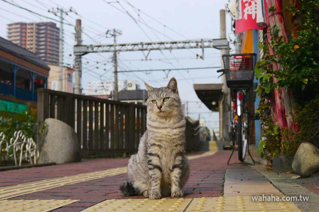 怒濤更新之路面電車(17):都電荒川線三ノ輪橋駅旁的白龍神社……旁的貓咪們